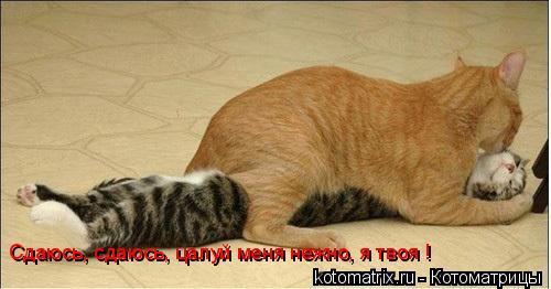 Котоматрица: Сдаюсь, сдаюсь, цалуй меня нежно, я твоя !