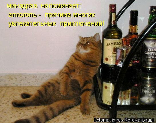 Котоматрица: минздрав  напоминает: алкоголь -  причина многих увлекательных  приключений!