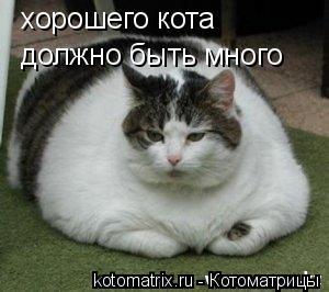 Котоматрица: хорошего кота должно быть много