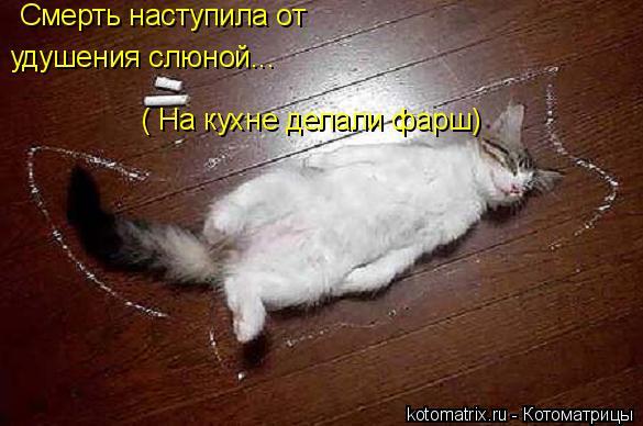 Котоматрица: Смерть наступила от удушения слюной... ( На кухне делали фарш)