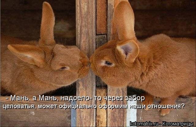 Котоматрица: - Мань, а Мань, надоело- то через забор целоватья, может официально оформим наши отношения?