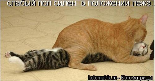 Котоматрица: слабый пол силен  в положении лежа...