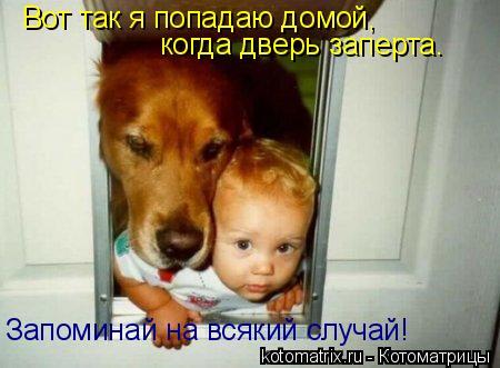 Котоматрица: Вот так я попадаю домой, когда дверь заперта. Запоминай на всякий случай!