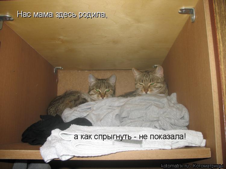 Котоматрица: Нас мама здесь родила, а как спрыгнуть - не показала!
