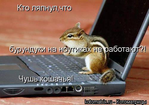 Котоматрица: Кто ляпнул,что бурундуки на ноутиках не работают?! Чушь кошачья!