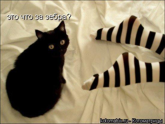 Котоматрица: это что за зебра?