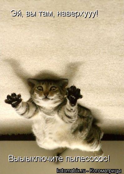 Котоматрица: Эй, вы там, наверхууу! Выыыключите пылесооос!