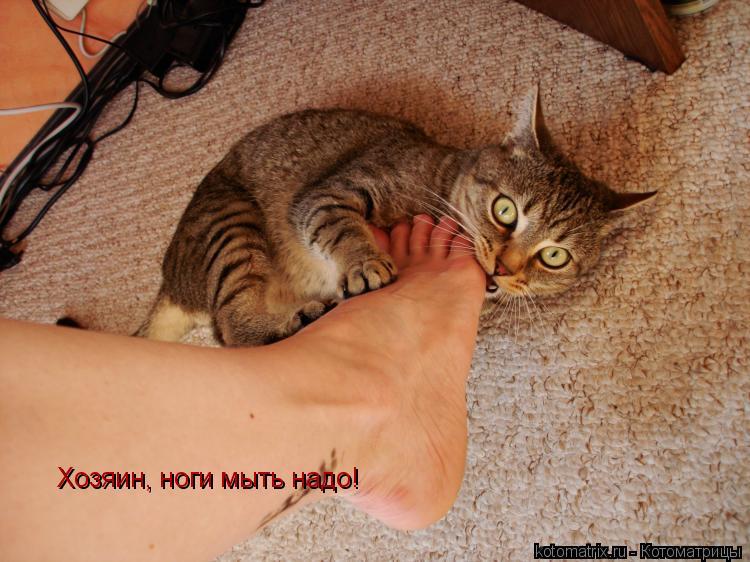 Котоматрица: Хозяин, ноги мыть надо!