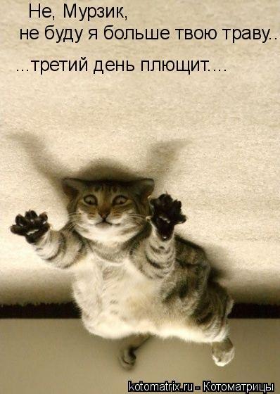 Котоматрица: Не, Мурзик,  не буду я больше твою траву... ...третий день плющит....