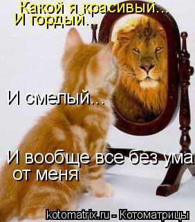 Котоматрица: Какой я красивый... И гордый... И смелый... И вообще все без ума от меня от меня