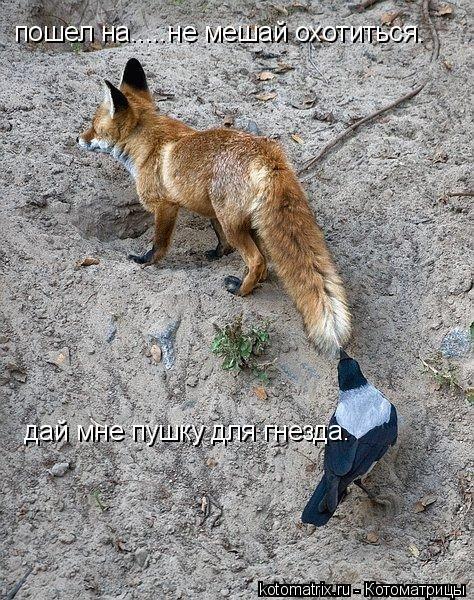Котоматрица: дай мне пушку для гнезда. пошел на.....не мешай охотиться.