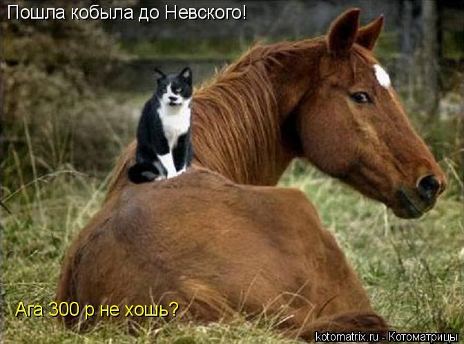 Котоматрица: Пошла кобыла до Невского! Ага 300 р не хошь?