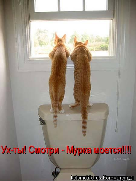 Котоматрица: Ух-ты! Смотри - Мурка моется!!!!