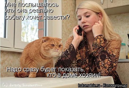 Котоматрица: Мне послышалось или она реально  собаку хочет завести? Надо сразу будет показать, кто в доме хозяин!