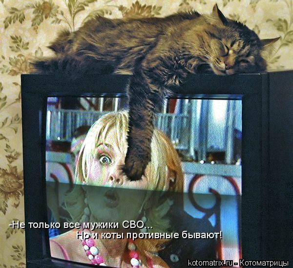 Котоматрица: -Не только все мужики СВО...  Но и коты противные бывают!