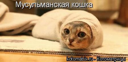 Котоматрица: Мусульманская кошка