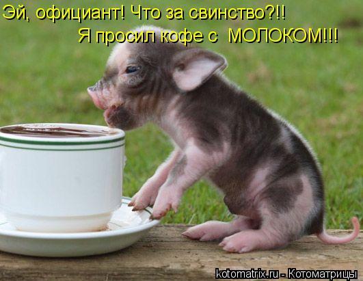 Котоматрица: Эй, официант! Что за свинство?!! Я просил кофе с  МОЛОКОМ!!!