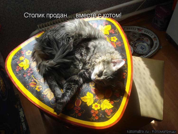 Котоматрица: Столик продан.....вместе с котом!