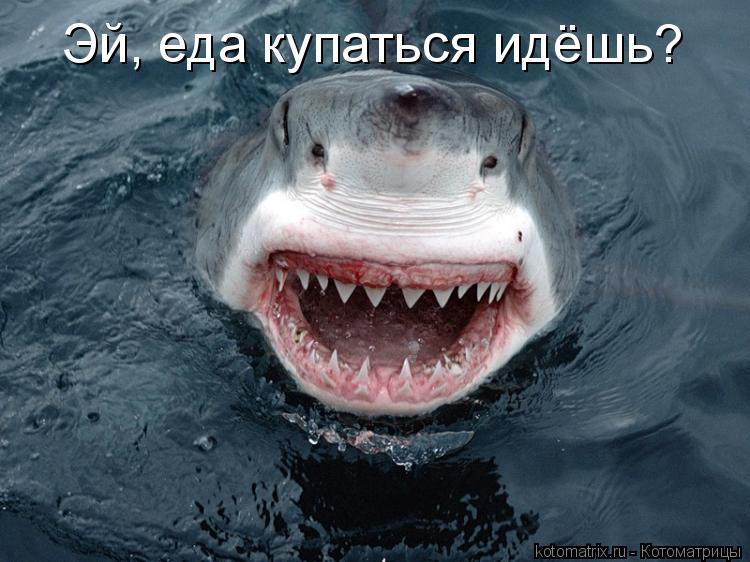 Котоматрица: Эй, еда купаться идёшь?