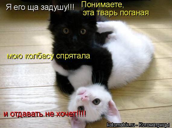 Котоматрица: Я его ща задушу!!! мою колбасу спрятала Понимаете, эта тварь поганая  и отдавать не хочет!!!!
