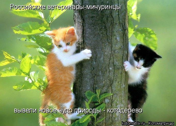Котоматрица: Российские ветеринары-мичуринцы вывели новое чудо природы - котодерево