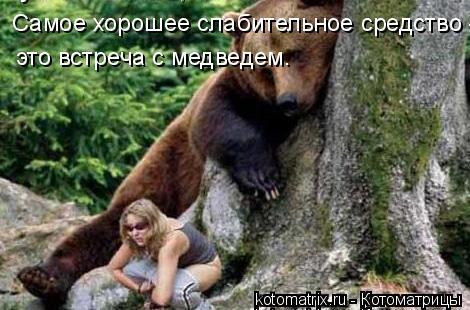 Котоматрица: Самое хорошее слабительное средство -  это встреча с медведем.