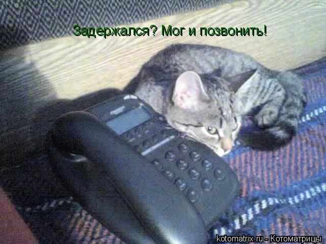 Котоматрица: Задержался? Мог и позвонить!