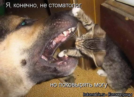 Котоматрица: Я, конечно, не стоматолог, но поковырять могу