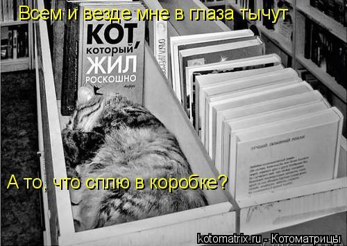 Котоматрица: Всем и везде мне в глаза тычут А то, что сплю в коробке?