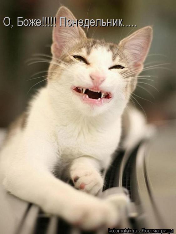 Котоматрица: О, Боже!!!!! Понедельник.....