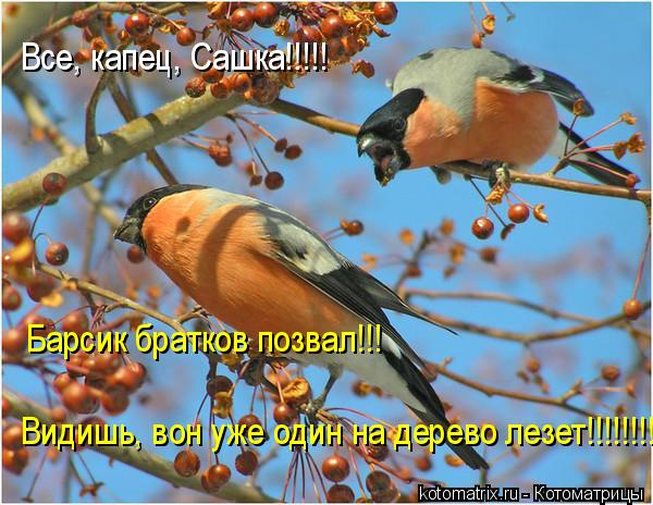 Котоматрица: Все, капец, Сашка!!!!! Барсик братков позвал!!! Видишь, вон уже один на дерево лезет!!!!!!!!