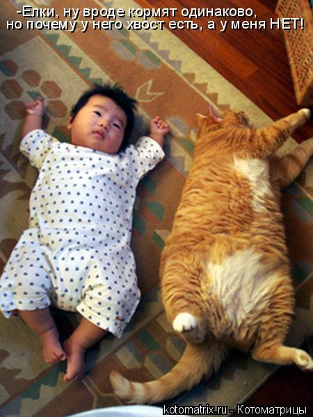 Котоматрица: -Елки, ну вроде кормят одинаково,  но почему у него хвост есть, а у меня НЕТ!