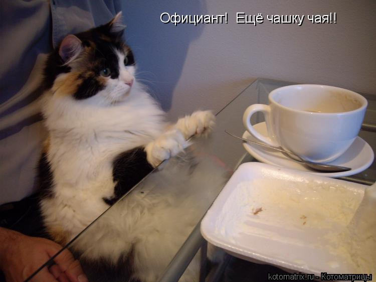 Котоматрица: Официант!  Ещё чашку чая!!