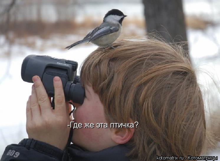 Котоматрица: -Где же эта птичка?
