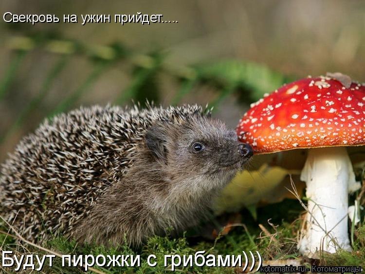 Котоматрица: Свекровь на ужин прийдет..... Будут пирожки с грибами)))