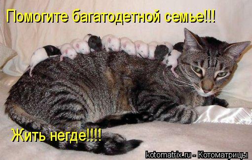 Котоматрица: Помогите багатодетной семье!!! Жить негде!!!!