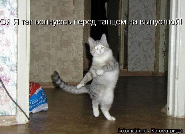 Котоматрица: Ой!Я так волнуюсь перед танцем на выпускной!
