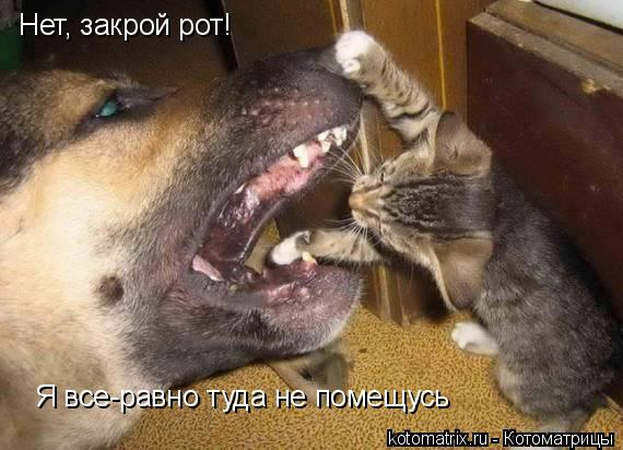 Котоматрица: Нет, закрой рот! Я все-равно туда не помещусь
