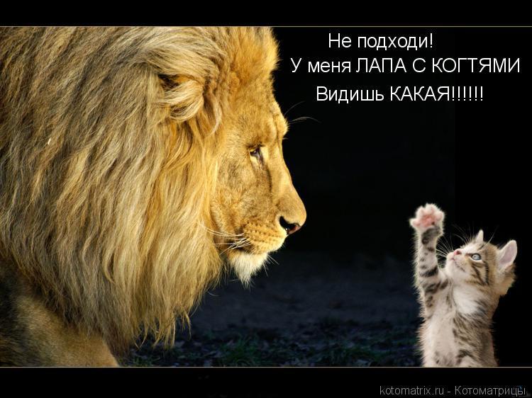Котоматрица: Не подходи!  У меня ЛАПА С КОГТЯМИ Видишь КАКАЯ!!!!!!