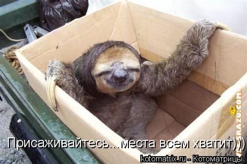 Котоматрица: Присаживайтесь...места всем хватит)))