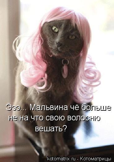 Котоматрица: Эээ... Мальвина чё больше  не на что свою волосню вешать?