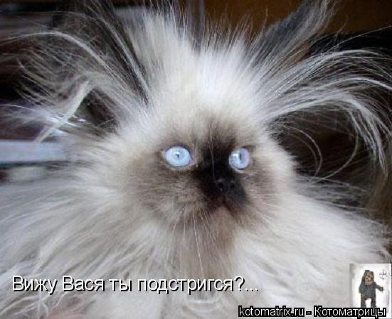 Котоматрица: Вижу Вася ты подстригся?...