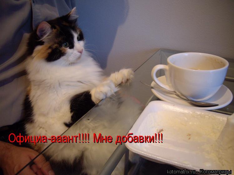 Котоматрица: Официа-ааант!!!! Мне добавки!!!