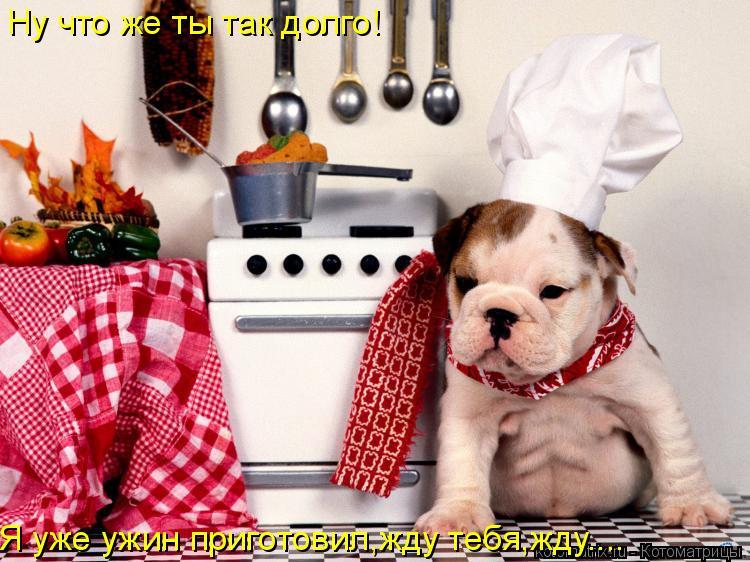 Котоматрица: Ну что же ты так долго! Я уже ужин приготовил,жду тебя,жду....