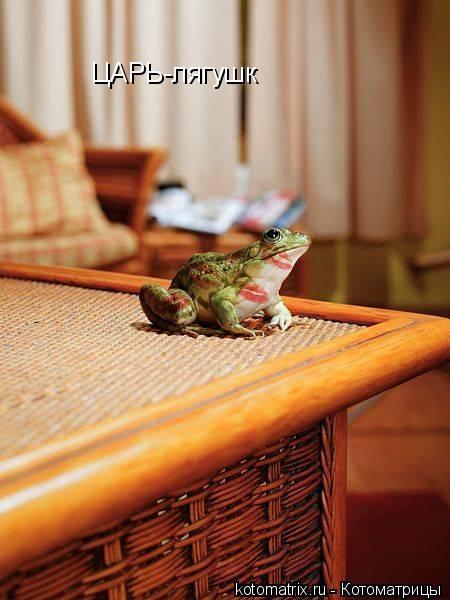 Котоматрица: ЦАРЬ-лягушк