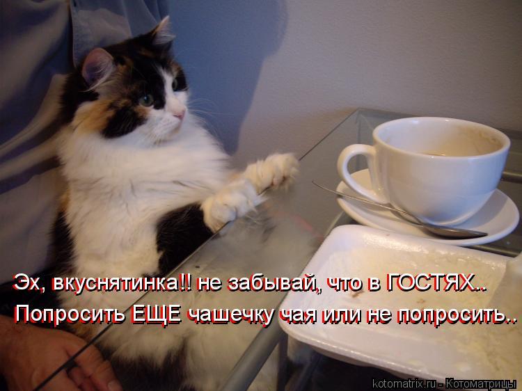 Котоматрица: Эх, вкуснятинка!! не забывай, что в ГОСТЯХ..  Эх, вкуснятинка!! не забывай, что в ГОСТЯХ..  Попросить ЕЩЕ чашечку чая или не попросить.. Попросить