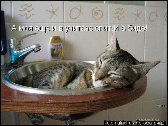 Котоматрица: А моя еще и в унитазе спит!И в биде!