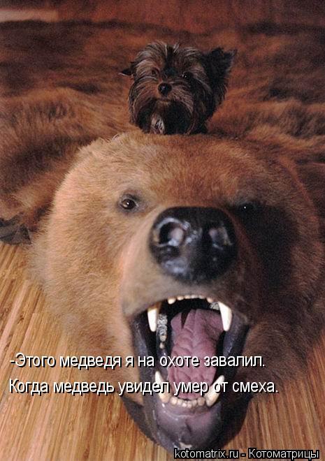 Котоматрица: -Этого медведя я на охоте завалил. Когда медведь увидел умер от смеха.