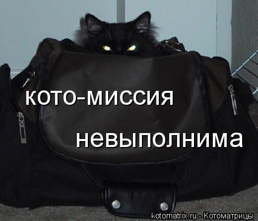 Котоматрица: кото-миссия  невыполнима