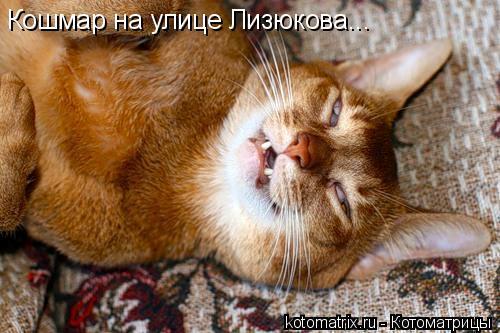 Котоматрица: Кошмар на улице Лизюкова...